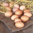 frische eier aus dem Stall