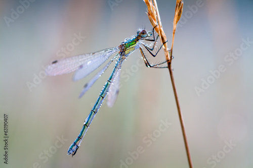colorful dragonfly in dew drops on a meadow