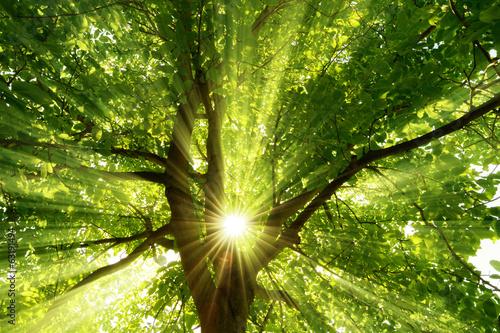 Fotobehang Bomen Sonne strahlt explosiv durch den Baum