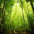 Leinwanddruck Bild - Sonnenstrahlen im Buchenwald