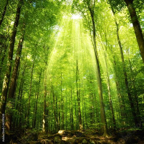 Leinwanddruck Bild Sonnenstrahlen im Buchenwald