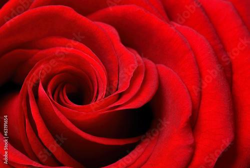 canvas print picture Ausschnitt einer schönen rote Rose