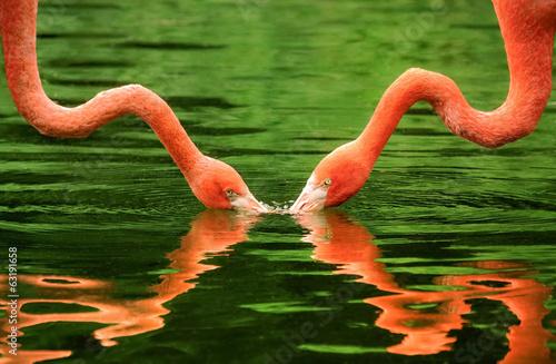 Fotobehang Flamingo Flamingo-Hälse mit symmetrischer Spiegelung