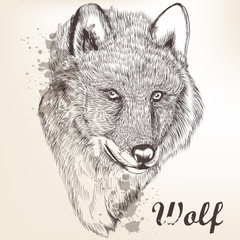 Hand drawn portrait of wolf