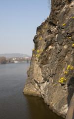 rock descending into the water with yellow flowers