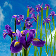 image of beautiful flowers on  the sky background