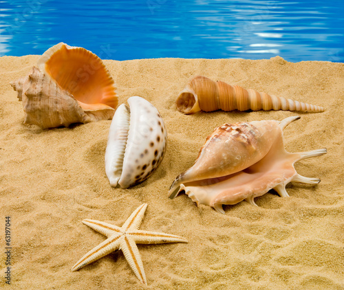 image  of seashells on the sand on the sea background