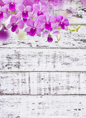 Orchids on white wood