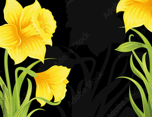Spring daffodils on the black background.