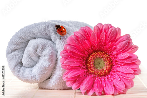 Pink gerbera with ladybird on a towel.