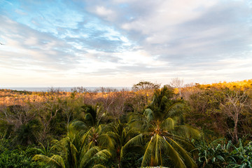 jungle view with sky in Ometepe Island