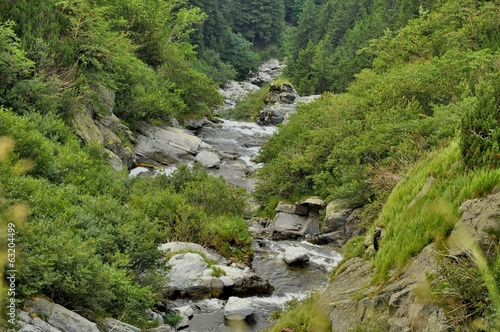 Mountain stream view