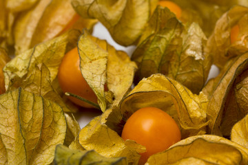 physalis fruits isolated on a white background