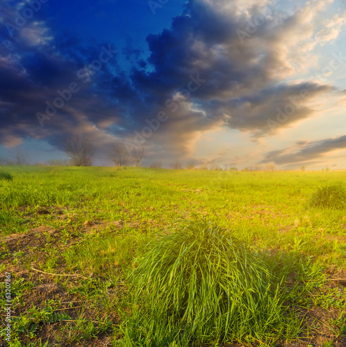 green fields at the evening