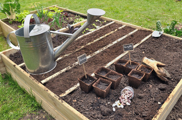 semis dans carré potager