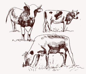 cow. animal husbandry. set of vector elements