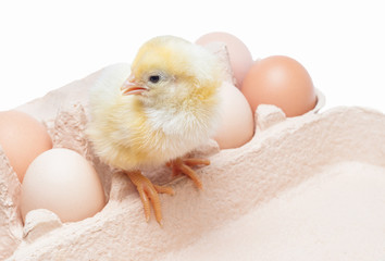 Box with eggs and a little chicken