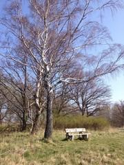 Parkbank unter einem Baum im park