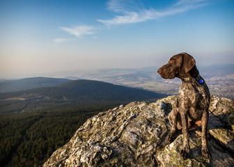 on a rock hound dog