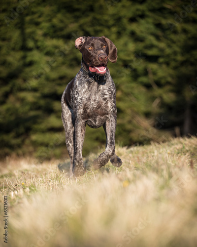 German Pointer at runtime