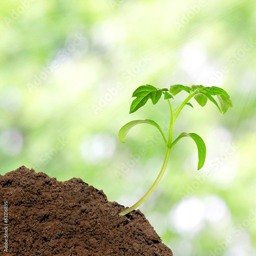 Small tomato seedling over sunlight background