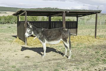 Donkey in cabin
