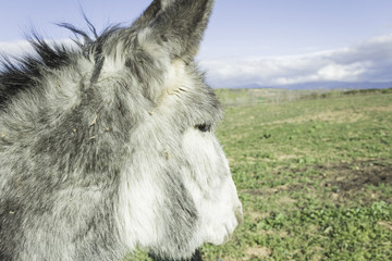 Lone donkey