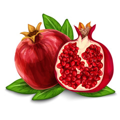 Pomegranate isolated poster or emblem
