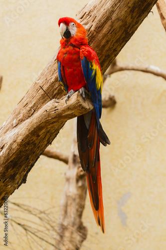 Poster Ara papegaai