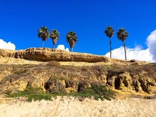 Palm Trees on Beach Cliffs