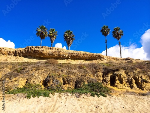 Palm Trees on Beach Cliffs