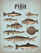 sealife illustrations: fish (2) - 63222625