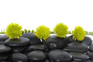green flower on black pebbles