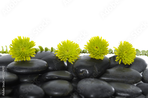 green flower on black pebbles