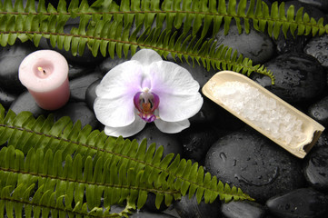 orchid and green fern with candle ,salt in bowl on wet pebbles