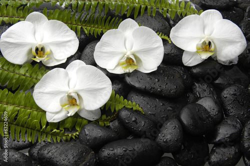 White four orchid with green fern on black pebbles