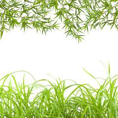 Photos illustrations et vid os de tige de bambou - Lucky bambou acheter ...