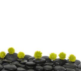 Set of green flower on black pebbles