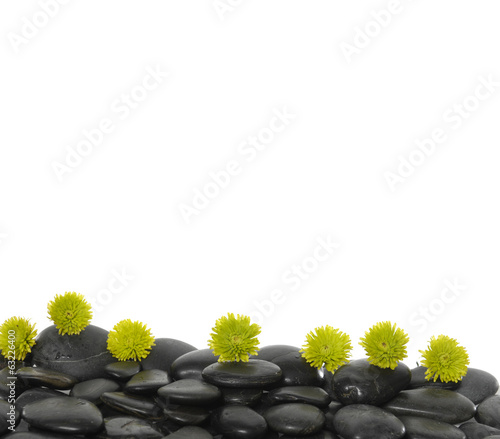 Set of green flower on black pebbles