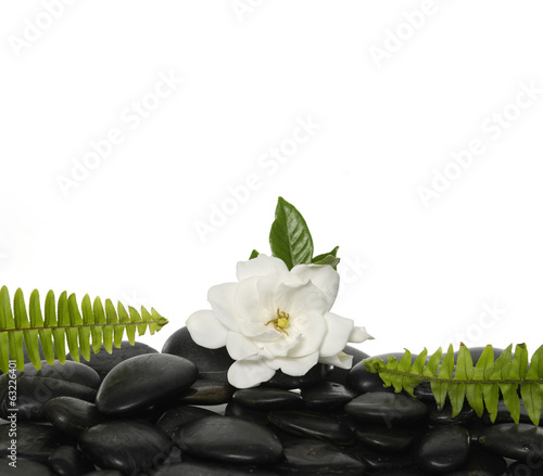 gardenia flowers with green fern on black pebbles