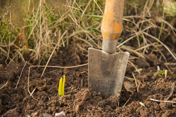 Garden shovel in a spring bed