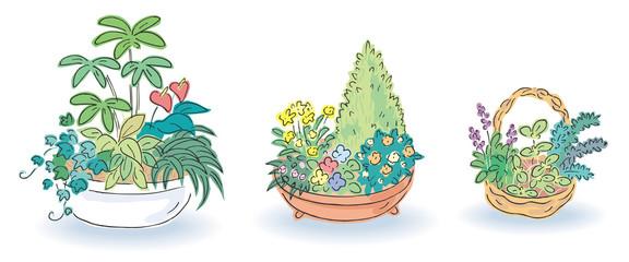 寄植え 草花