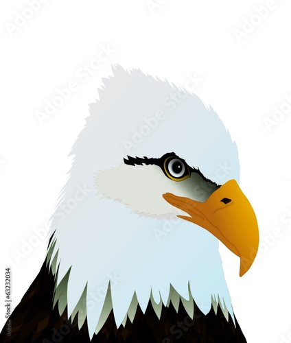 Eagle Head on White