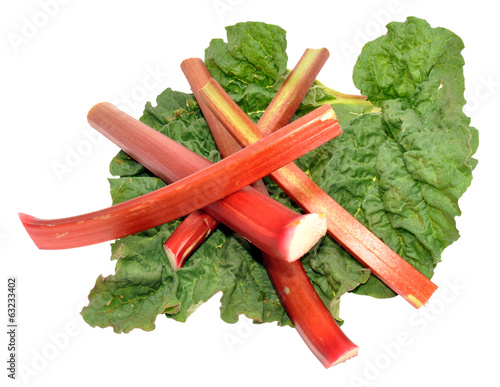Freshly Picked Rhubarb Stalks