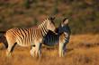 Plains Zebras in early morning light