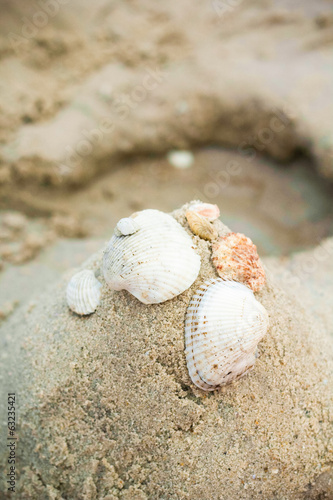 Seashell on sand on beach summer time