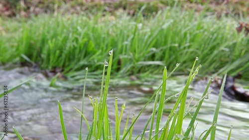 Dew water drops on grass leaves with creek