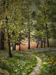 Enchanted nature series - Mysterious summer forest