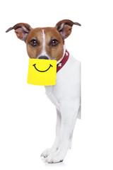 yellow not dog