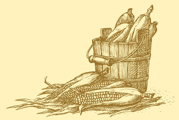 Vector still life. Sketch of the harvest of corn cobs